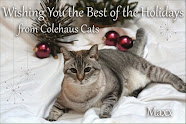 Colehaus Cats
