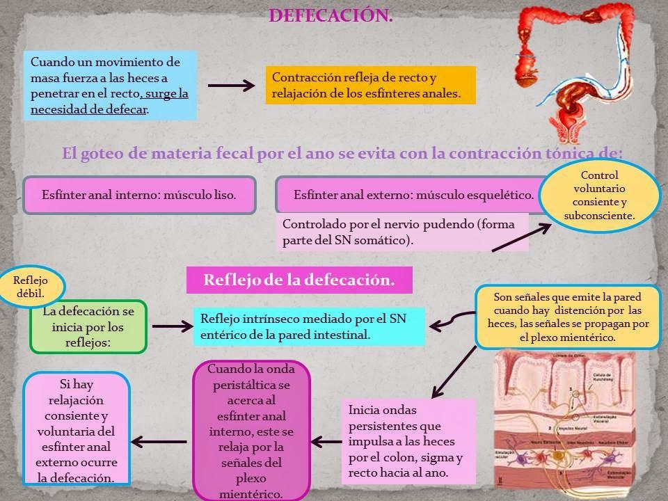 REFLEJO DE LA DEFECACIÓN. | Blog de Fisiología Médica