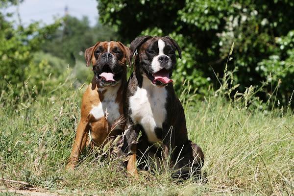 Niños atacados por perros de razas peligrosas