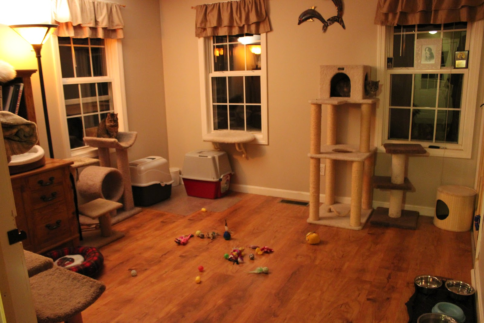 The Laughing Raccoon The cat room is done