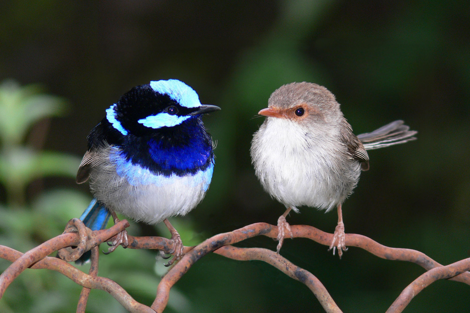 Best Of Nature Why Are Male Birds More Beautiful Than Their Partners