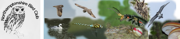 Northamptonshire Bird Club