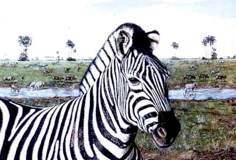 Pinturas cuadros lienzos cebras al leo - Cuadros de cebras ...