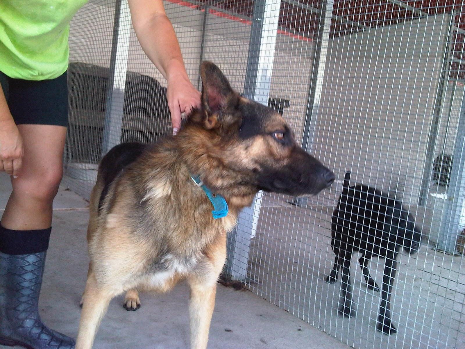 Associazione amici del cane di latina 9 settembre 2012 - Portare il cane al canile ...