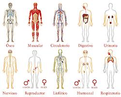 Sistemas corporales