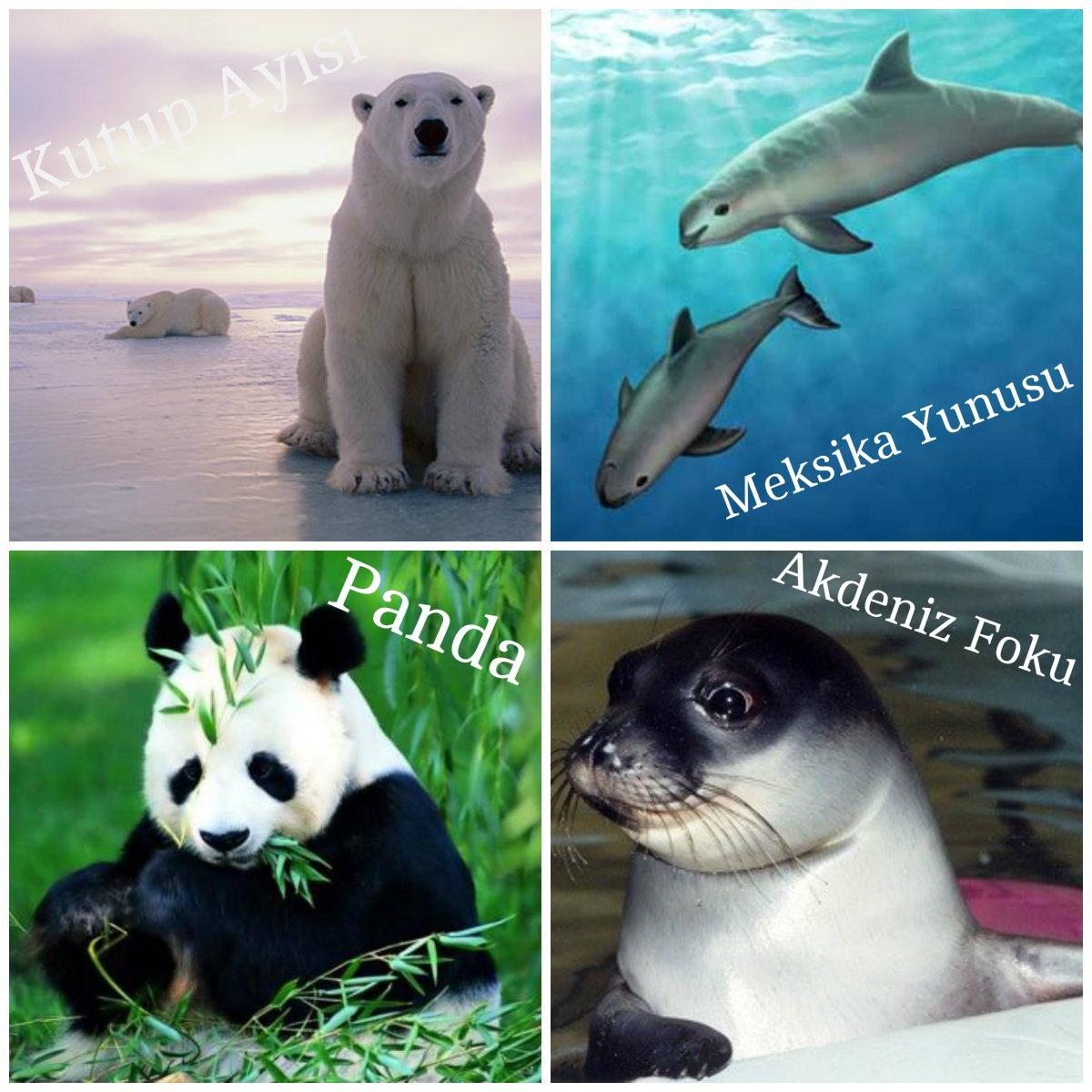 Nesli tükenmekte olan hayvanlar