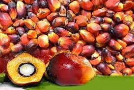 MCX crude palm oil, Agri Commodity Tips, free agri calls, Futures Trading Tips