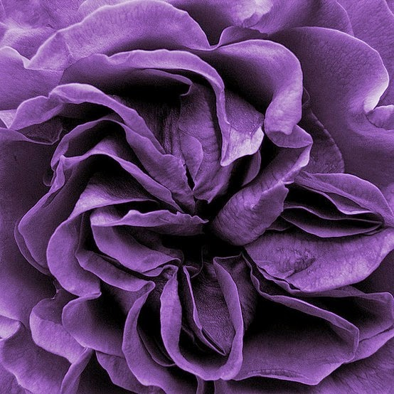 Purple Mood design-dautore: color mood:violet