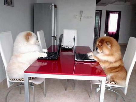 Chó chat chit