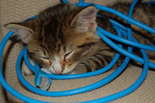 20 fotos engraçadas cute de gatos dormindo