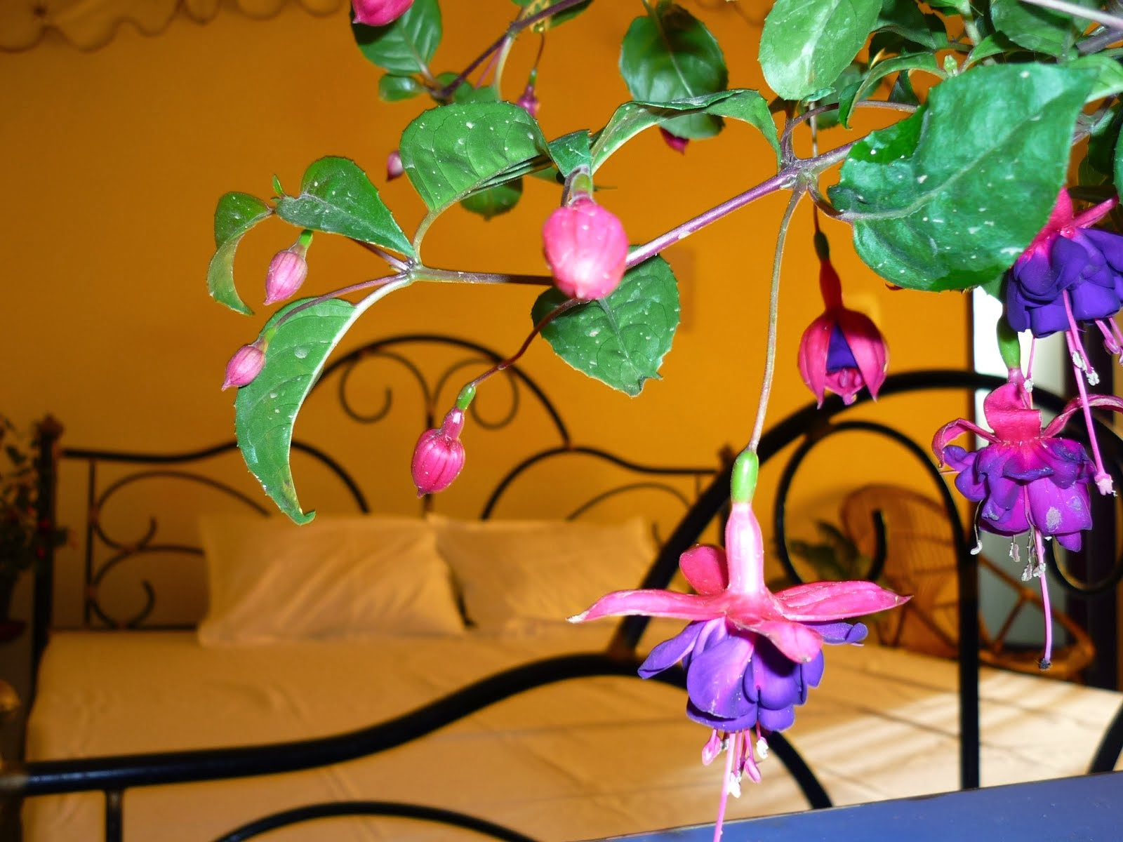 Luxury Room   180 Degree Resorts