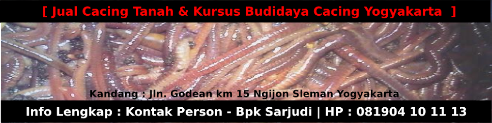 Jual Cacing Jogjakarta | Jual Cacing Tanah Merah Yogyakarta |  Jual Cacing Lumbricus Jogja