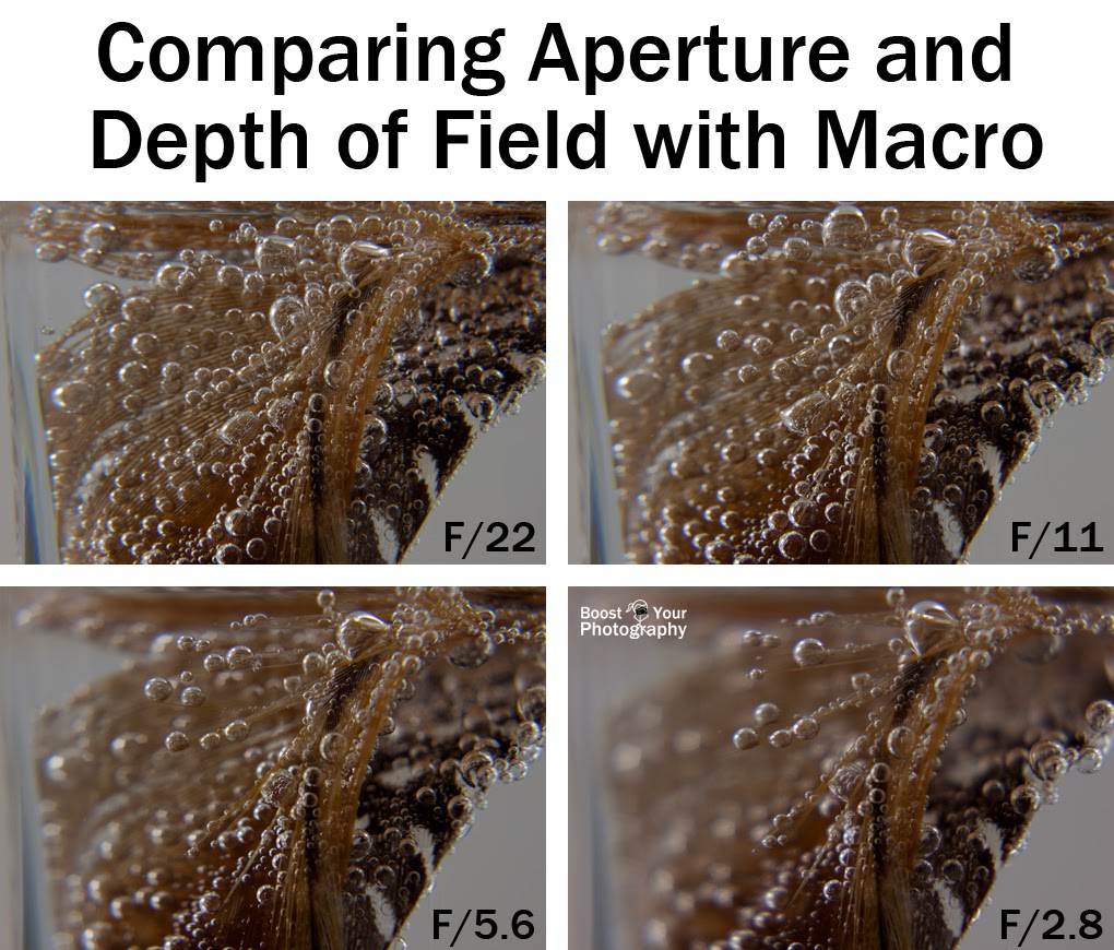 Comparing Aperture and Depth of Field for Macro and Close-Up Photography | Boost Your Photography
