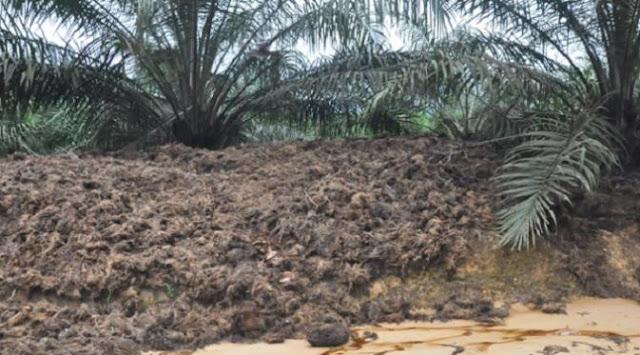 6 Fakta Mengerikan, Mengapa Indonesia Sebaiknya Tak Menanam Sawit