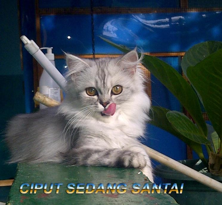 Kucing Cats Kucing Lucu Tentang Kucing Kucing