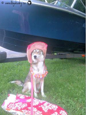 Summer Dawgs - Fun In The Sun