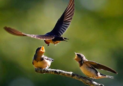 belajar-dari-kehidupan-burung