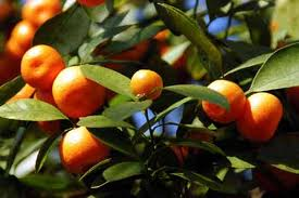 Sweet Oranges are used on Linen Spray