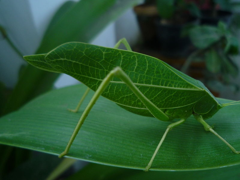 Ivy Leaf Bug additionally 316870523758418095 moreover Sesame Street Forest Of Fun as well Carrie Underworm in addition Creative Diy Sesame Street First Birthday. on oscar grouch sesame street worms