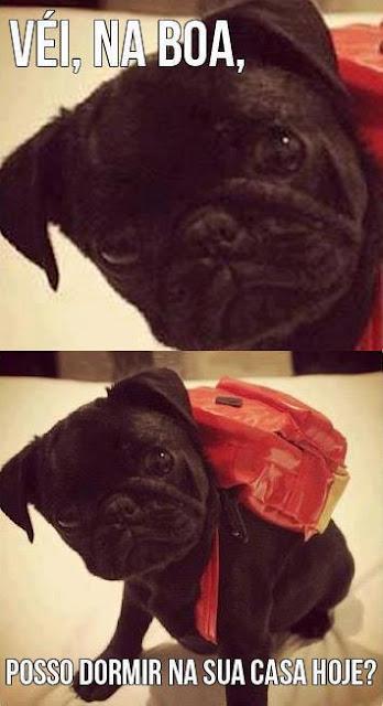 imagens engraçadas para facebook cachorrinho
