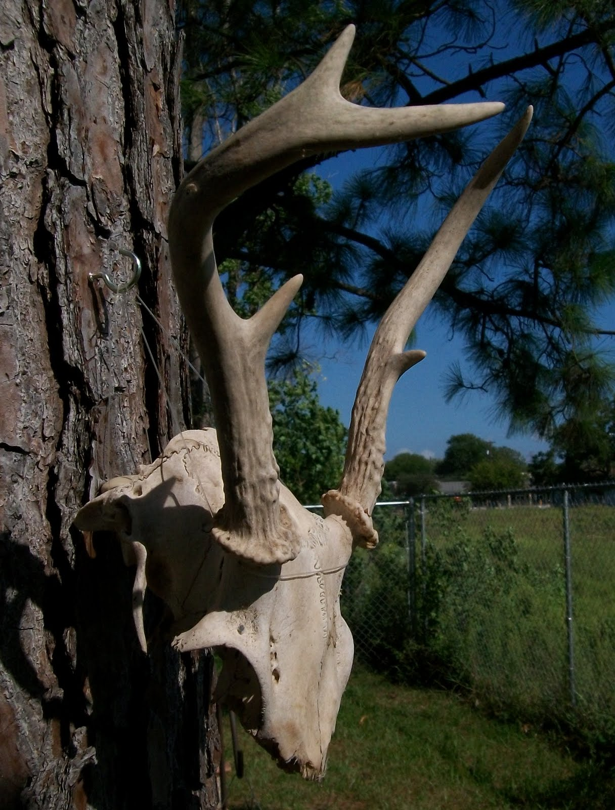 Deer Antler Home Decor