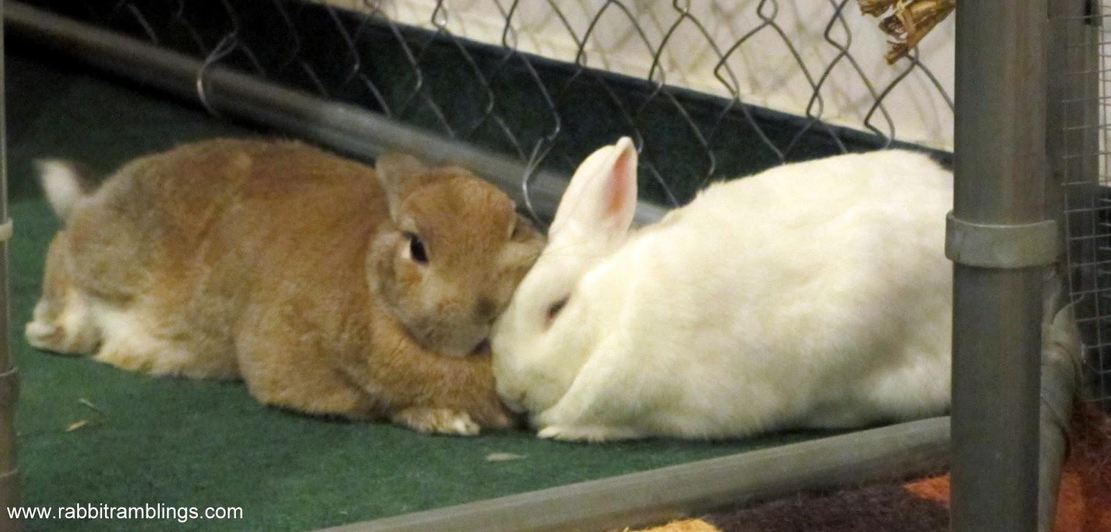 Rabbit Ramblings  Bunny snuggle at the pen gate 949faaa57