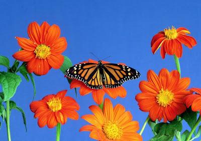 pintura-flores al-oleo