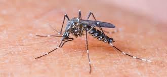 Cientistas descobrem anticorpo capaz de neutralizar vírus da dengue