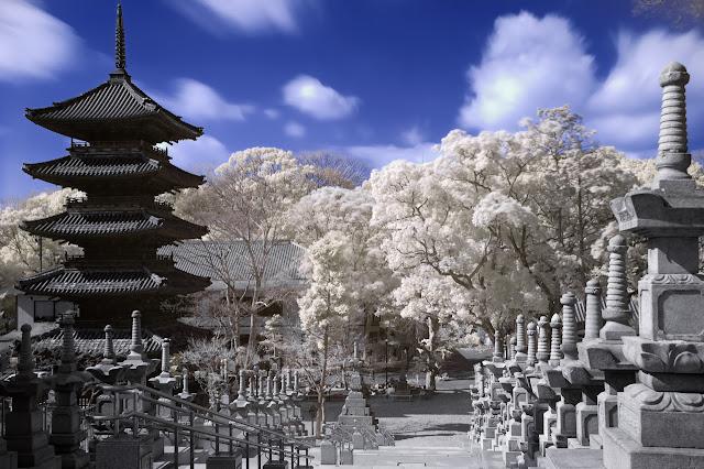Pagoda y sakura