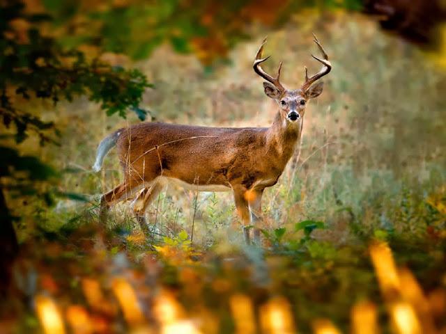 """<img src=""""http://4.bp.blogspot.com/-jlm32RA-nBk/Uq8JxplXWcI/AAAAAAAAFko/lkKgdWvJWwg/s1600/cbv.jpeg"""" alt=""""Deer wallpapers"""" />"""