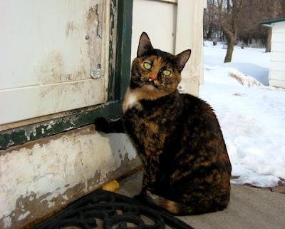 Please suh, let me in?
