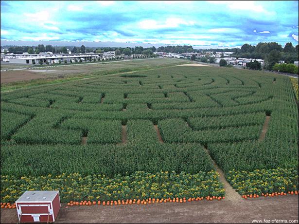 fazio farms corn maze