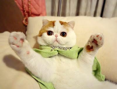 Foto-foto kucing paling imut bernama Snoopy 08