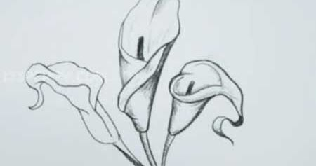 how to draw a calla lily video lessons of drawing painting