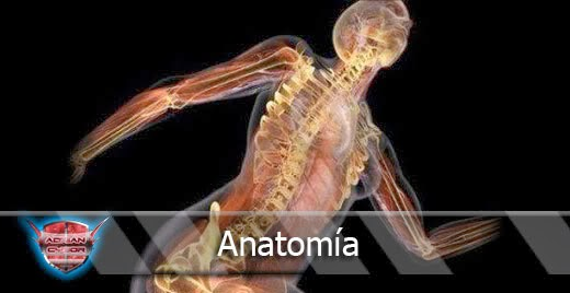 Anatomía del estrés