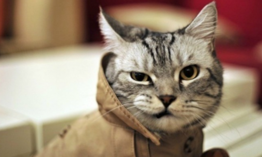 Funny Cat Videos Must See