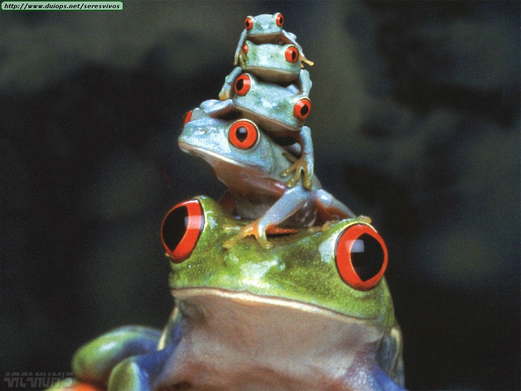 Amazoncom Red Eye Tree Frog 8 by Fiesta Garden amp Outdoor