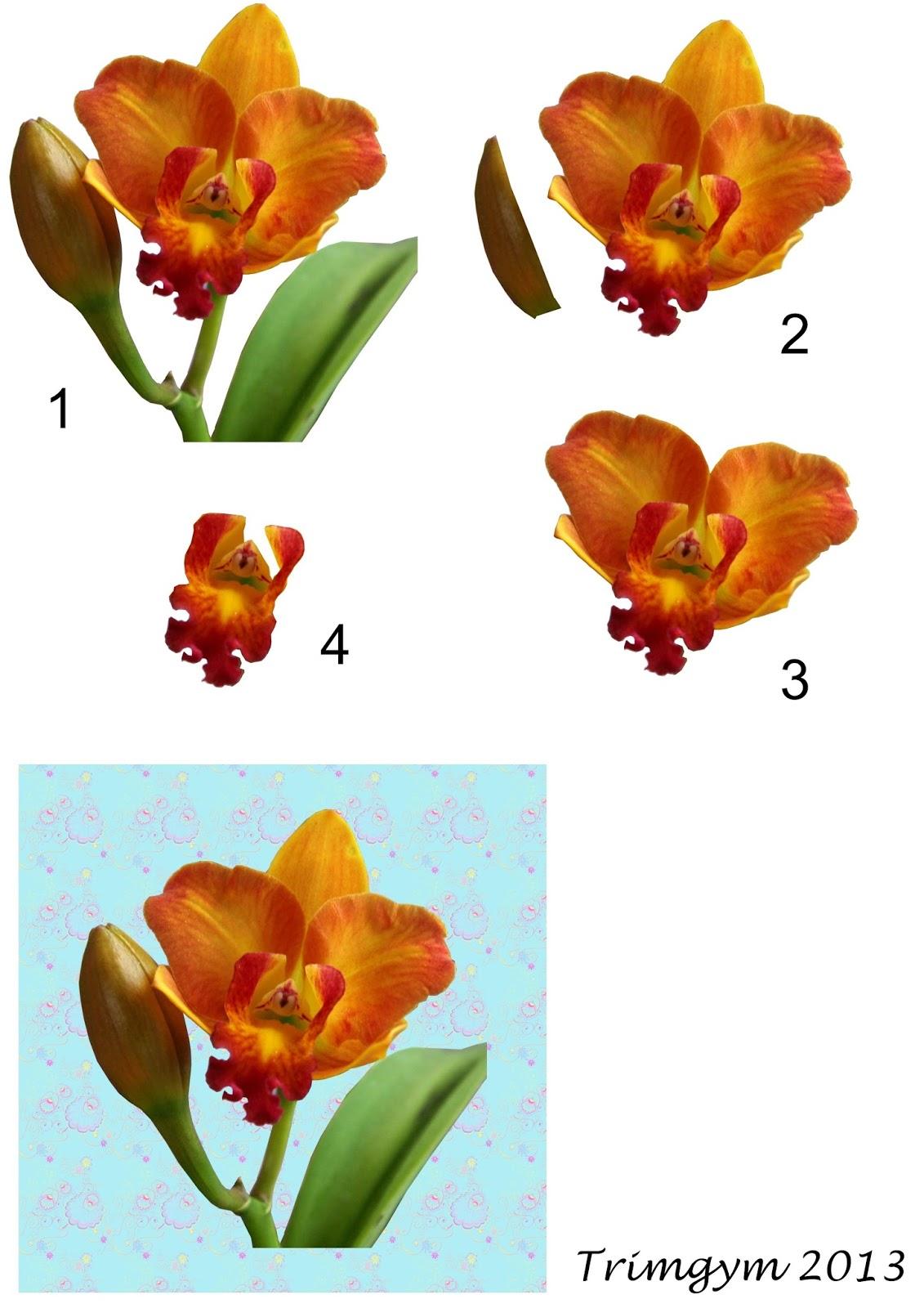 http://4.bp.blogspot.com/-jmfBq6IlJGI/UxIYOTfamsI/AAAAAAAASJc/NM8I-ilznec/s1600/Orchid+decoupage+card+topper+by+Trimgym+1.jpg