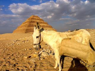 ... de egipto línea orillas del sinuoso río nilo y rara vez se alejan de