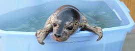 Реабилитационный центр для тюленят