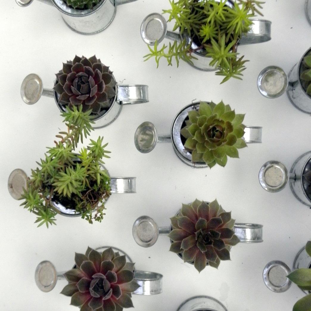 Blossoms Wild Herb Lavender Farm: Succulent Wedding Favors