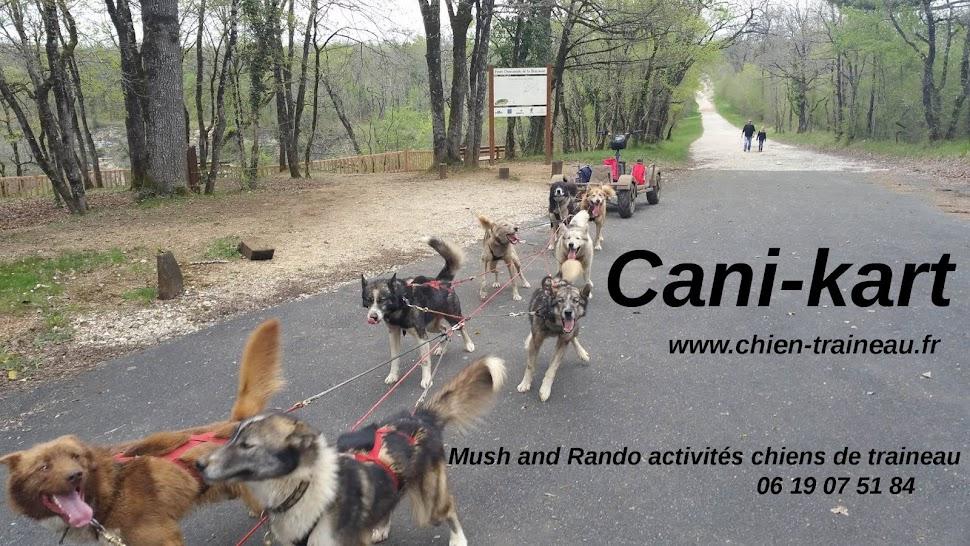 Cani kart chiens de traineau