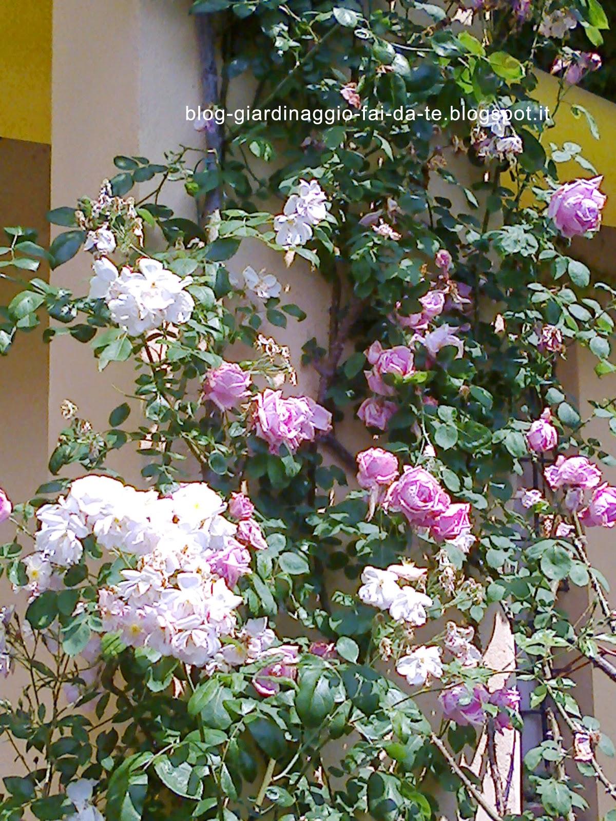aiuole giardino immagini: servizi albe giardini sagl. bel giardino ... - Giardino Fiorito Disegno