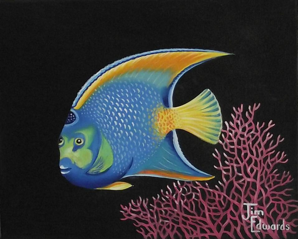 Queen Angelfish 8 x 10