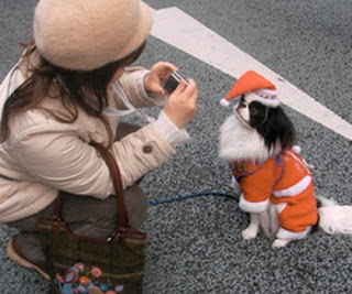 Listo+para+la+Navidad Imagenes chistosas de perros navideño