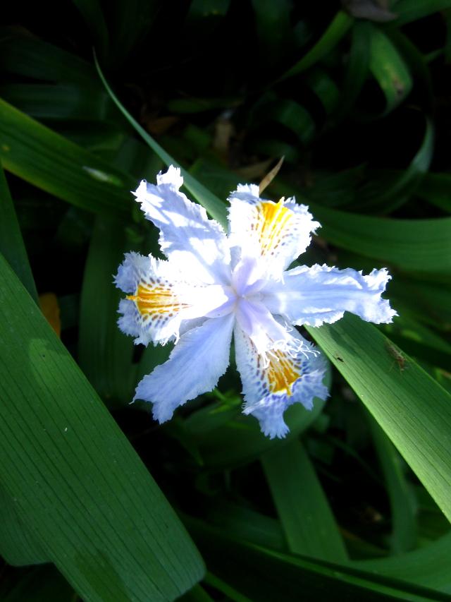 Flower Madeira