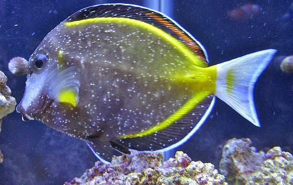 Entre peces y corales por andres corral errores comunes for Acuarios para peces marinos