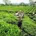 Chế biến, bảo quản nông sản sau thu hoạch: Nâng cao giá trị sản phẩm