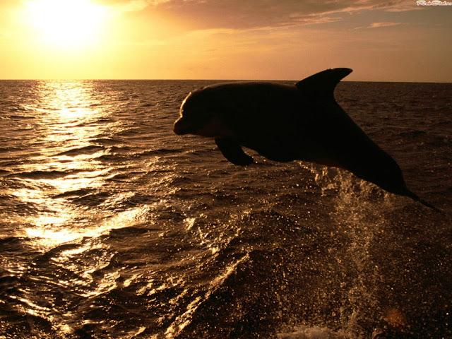 фото дельфинов