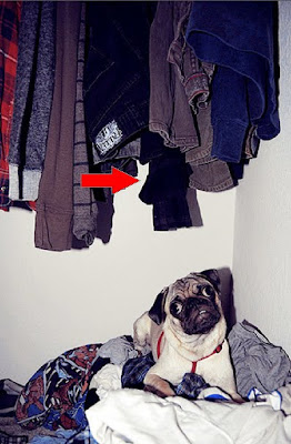 Tom Ford's 22 Essentials, Presented By Pugs Seen On www.coolpicturegallery.us